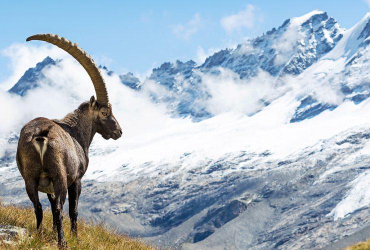 Valle d'Aosta's Gran Paradiso