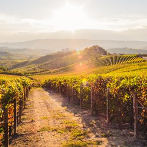 Piedmont's Langhe District